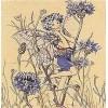 Cornflower Fairy