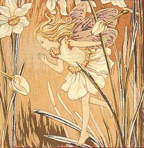 Narcissus Fairy