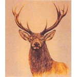 Stag facing left